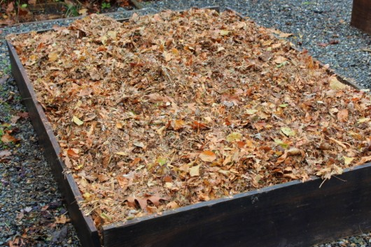 Add chopped leaves to your vegetable garden betty on - Prepare vegetable garden for winter ...