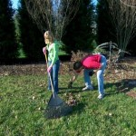 Clean up the leaves that fell on your lawn after your cleanup last fall