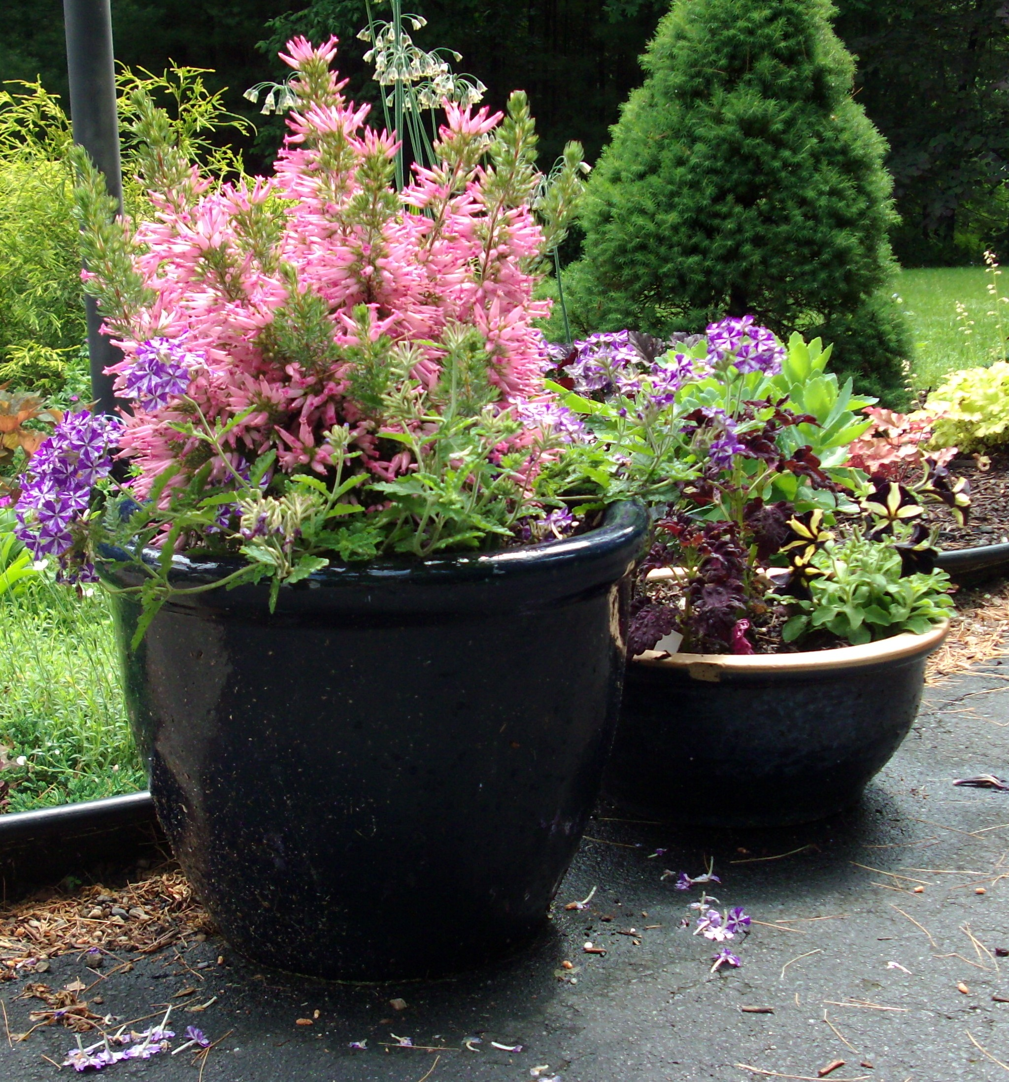 Horticultural hints june betty on gardening - Container gardening ...