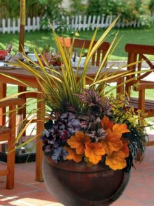 Freshen up your containers for fall with heucheras and grasses - not mums