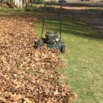 Save yourself a spring fertilizer feeding by mowing leaves back into the lawn