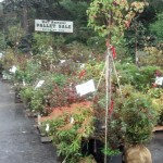 Nurseries want to go into the winter months with their stock at low levels. Bargains abound, but plant carefully.