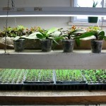 March is a great time to start vegetable seeds under grow lights