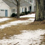 Once the lawn had dried, it needs raking, not fertilizing