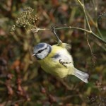 Seed heads left in place provide food for wintering birds