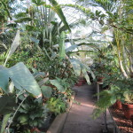 Greenhouses like this one at Wellesley College offer a winter respite for the gardener.