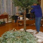 The branches from your Christmas tree make an excellent ground cover (and cutting the tree up indoors makes it easier to get outside!)